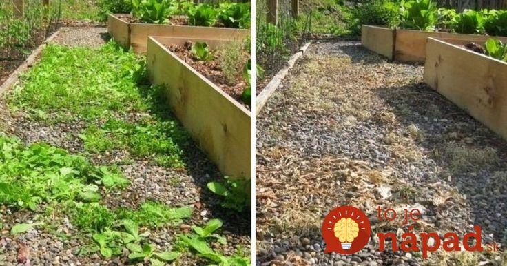 Zázrak, s ktorým sa za pár minút zbavíte buriny v celej záhrade. Ide to aj bez námahy!