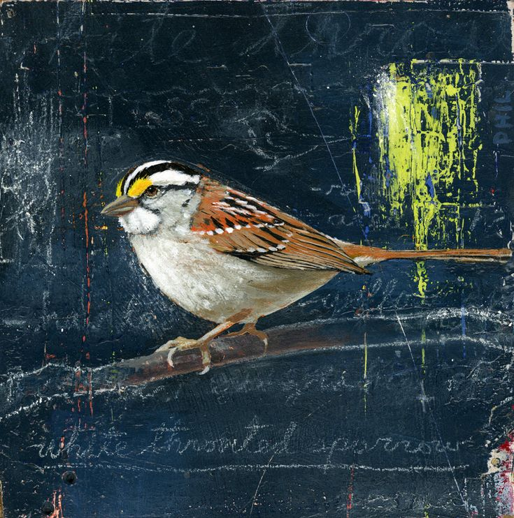 'White-throated Sparrow'. Illustrated by Phil. Represented by i2i Art Inc. #birds #i2iart