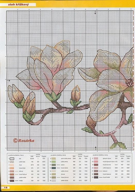 Magnolia-minta1