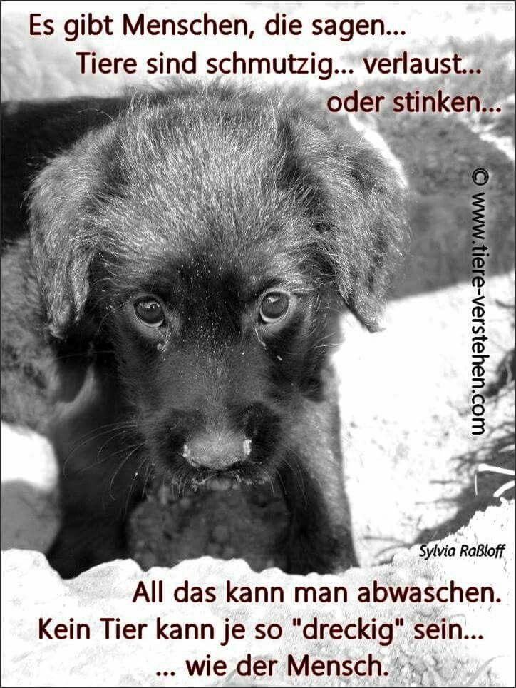 Kein Tier...