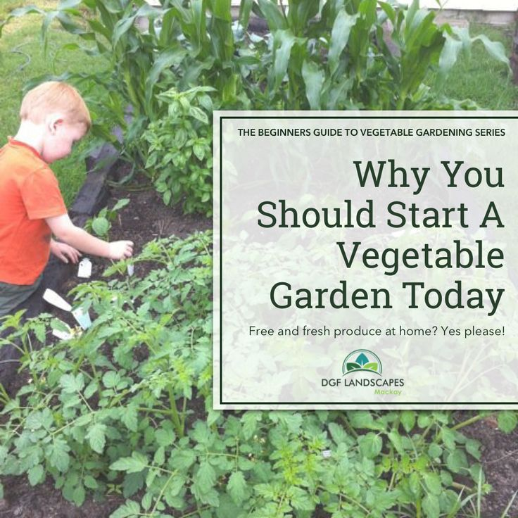 Why You Should Start A Vegetable Garden Today   Beginner's Guide to Vegetable Gardening Series   DGF Landscapes   #garden #vegetablegarden #vegetablegardening #vegetables