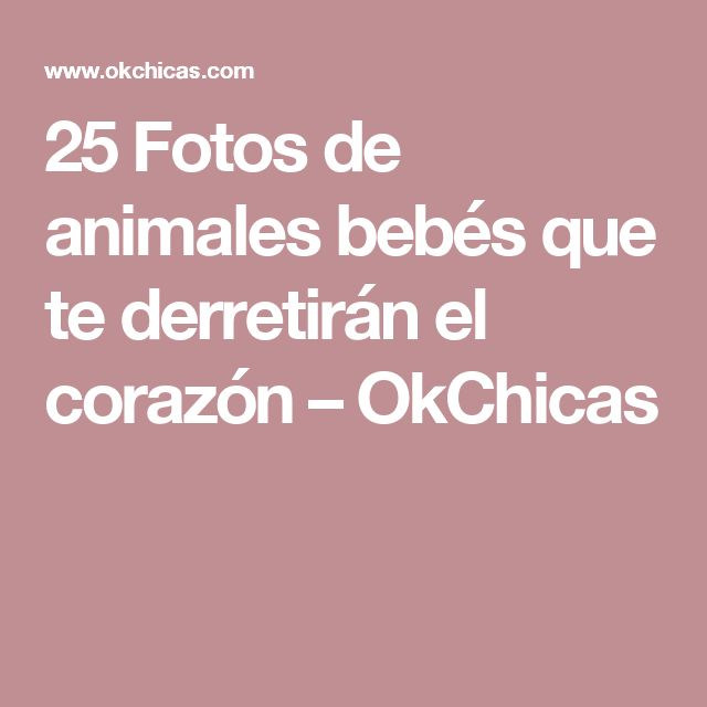25 Fotos de animales bebés que te derretirán el corazón – OkChicas