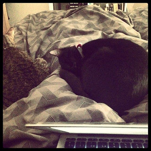 #domingos trabajando en la #cama todos vagoncios #lana y #brian durmiendo FELIZ DOMINGO!
