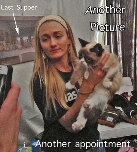 """""""Grumpy cat gets a movie deal"""" Posted June 1, 2013 Grumpy Cat has now been signed to star in her own movie. She is a household name around the world, with more than 930,000 likes on her Facebook page. She's had television appearances on Today, Good Morning America, CBS Evening News and Anderson Cooper Live. Her next big deal may be the big screen. #cats"""