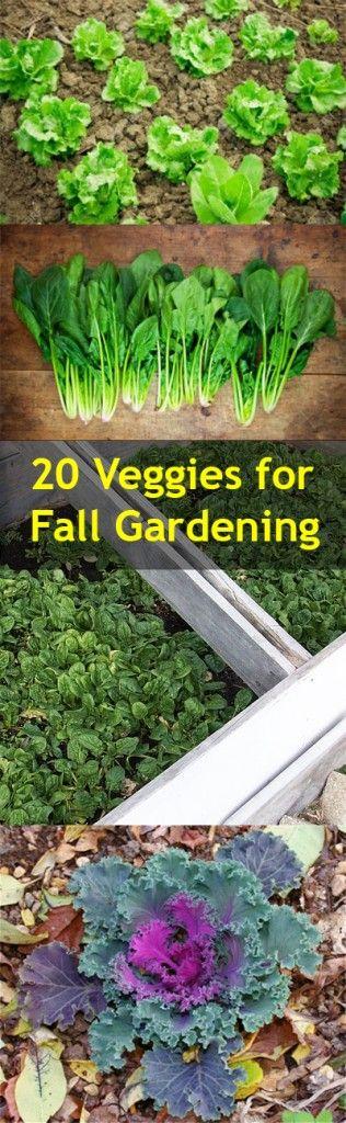 Fall Gardening, Cold Weather Gardening, Vegetable Gardening, Popular Pin,  Gardening Hacks,