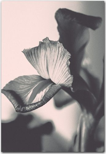 Hellooo | Botanical, Black and White Collection | George Fivaz Fine Art Photography Gallery | Limited edition print available for purchase  on www.georgefivaz.com