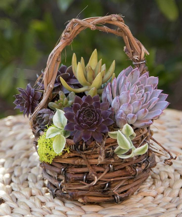 Exotic Grapevine Basket