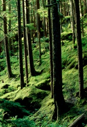 Mt. Baker-Snoqualmie National Forest USDA Forest Service Website, campgrounds, recreation