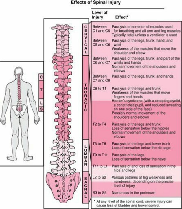 20 best intervention ideas for patients with spinal cord injury spinal cord injury quick reference of nerve innervations sciox Images