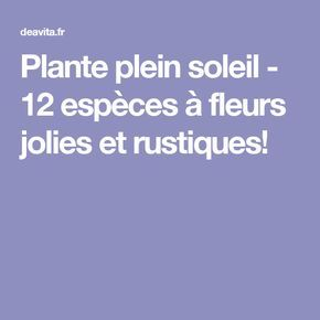 Plante plein soleil - 12 espèces à fleurs jolies et rustiques!