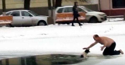 Il video del salvataggio di un cane intrappolato in uno stagno ghiacciato di Kostroma, una città a nord-est di Mosca,. A salvarlo da morte certa, un anonimo soccorritore che, a piedi scalzi e a torso nudo, lo ha trascinato fuori da quelle acque gelide un vero uomo!