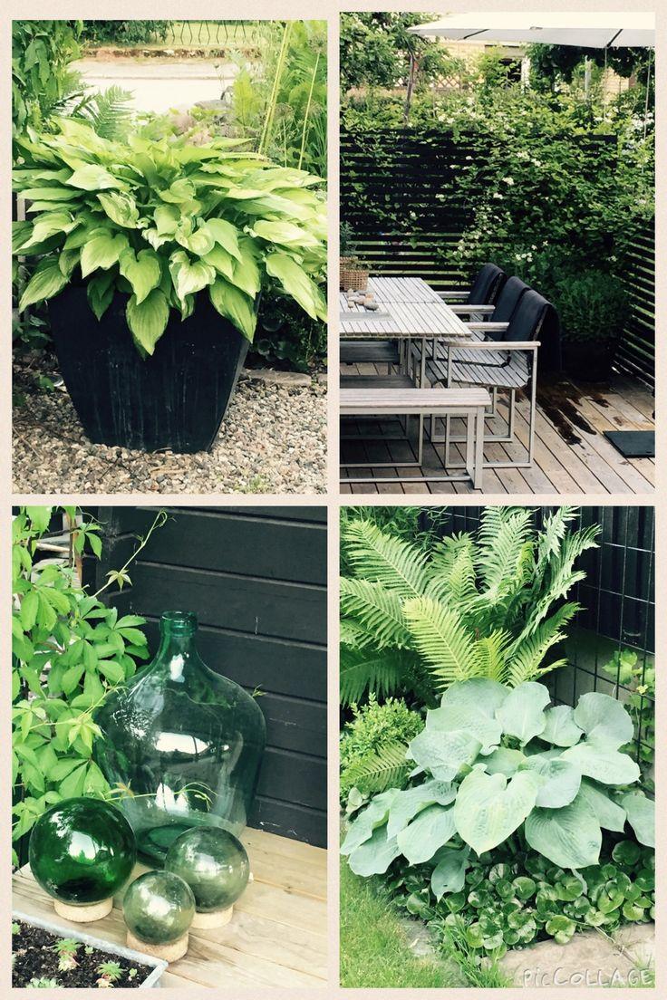 Collage från trädgården. Gillar det gröna.