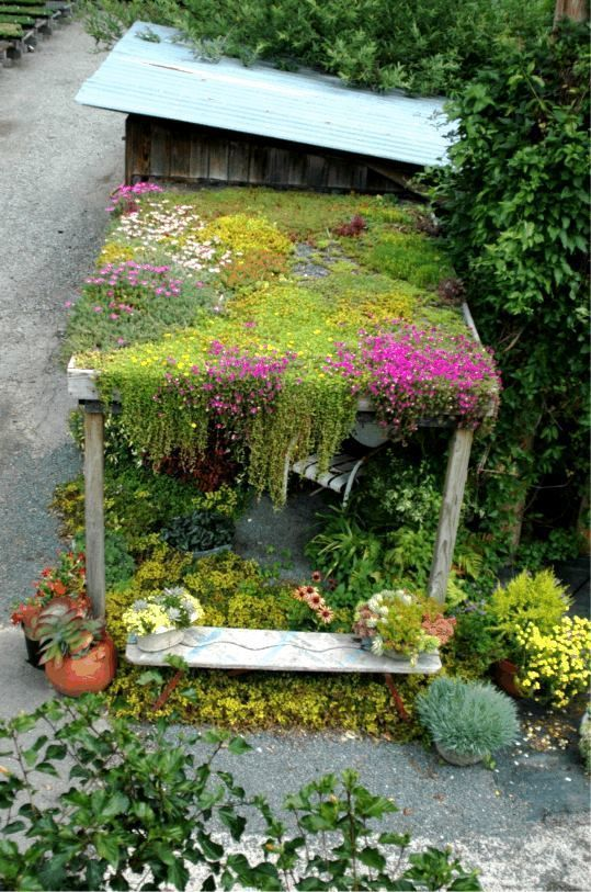 Gorgeous living roof with sedums, succulents, and mosses.
