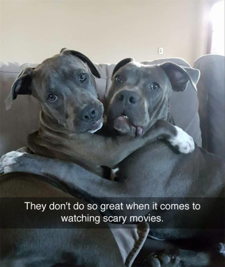 Funny Animal Pictures Of The Day – 26 Pics #funnypics #funny #lol