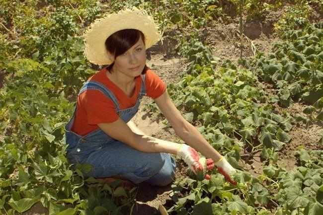 Akár ezer kilogramm zöldséget is megtermelhet a kertjében, ha kíméli a derekát.