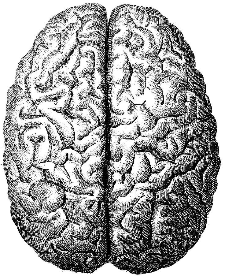 Mmmm. Braaaaaiiiiiiinnn! Black White Brain Drawing, For