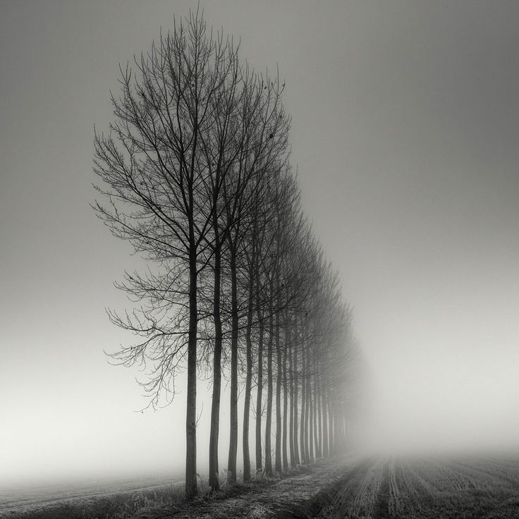 Long Exposure Tree Photography by Pierre Pellegrini | DeMilked