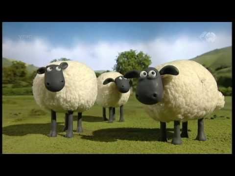 Shaun het schaap - Bijenjacht - YouTube