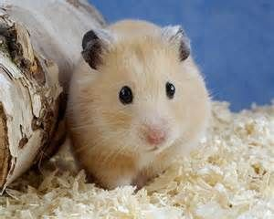 animals - Yahoo Image Search Results