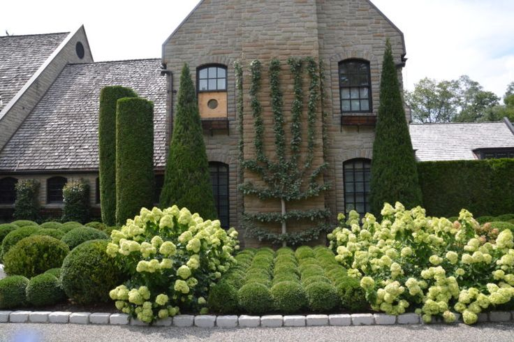 limelight in the back and Little Lime hydrangeas in the front make for a full wall of hydrangeas.