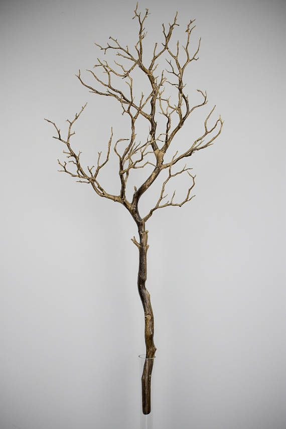 Where To Buy Decorative Branches  from i.pinimg.com