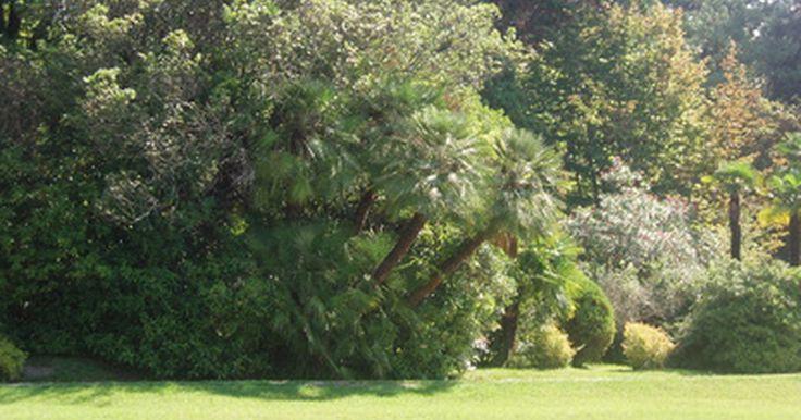 El cloro en el agua del jardín, ¿puede lastimar las plantas y los árboles?. La mayoría de las plantas y de los árboles son tolerantes al cloro en niveles normales. Los niveles bajos de cloro en el suministro del agua municipal no afecta significativamente a las plantas. Además, los niveles de cloro en la mayoría de las piscinas no son un riesgo para las plantas ubicadas alrededor del perímetro. Sin embargo, en ...