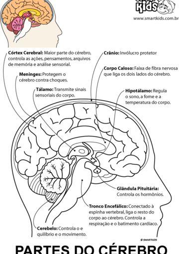 Partes do Cérebro