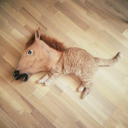 【画像】馬かと思ったらもふもふのアイツやんけwwwwwwwww|オタクニュース