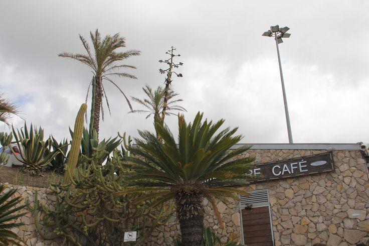 Windsurf Café, Carcavelos, fev 2014