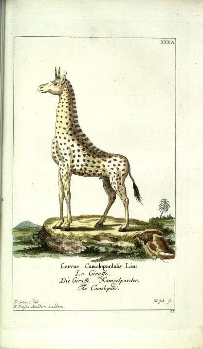 Bd 1 plates (1780) - Gemeinnüzzige Naturgeschichte des Thierreichs : - Biodiversity Heritage Library. Image from the most-viewed Flickr album from Academy of Natural Science, Philadelphia. http://biodiversitylibrary.org/page/31035515. #BHLat10