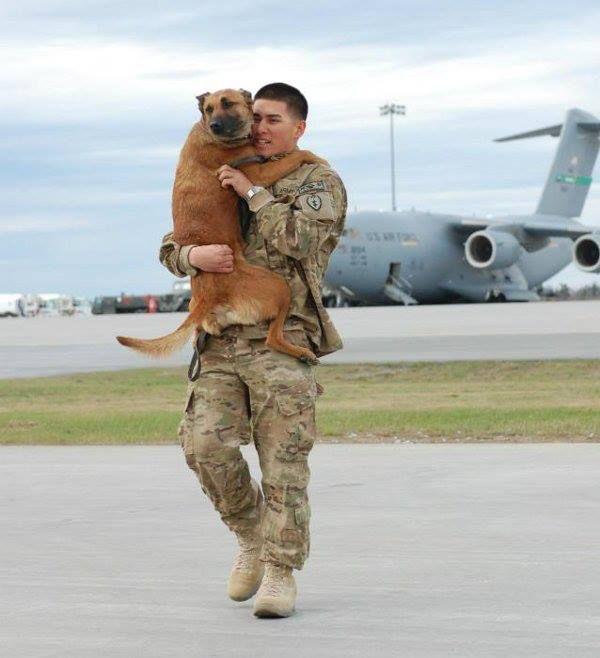Reunidos: un soldado y su perro