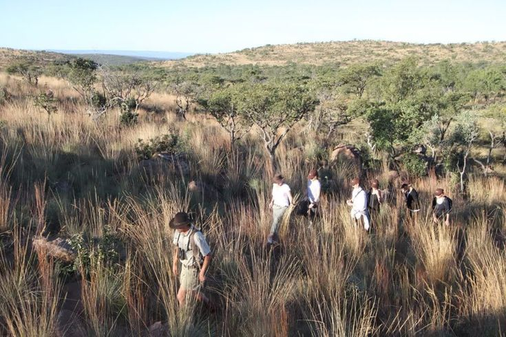 There is one experience our guests cannot get enough of, guided bush walks! This is a great opportunity to get closer to the action, see the smaller creatures and to see Welgevonden's wildlife from another perspective. If you want to know more, visit www.mhondoro.com/experiences.