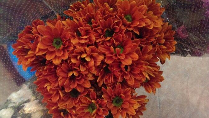 Srays orange