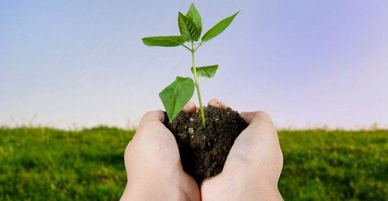 Secondo i dati dell'Istituto di Ricerca sull'Agricoltura Biologica (FIBL) e della Federazione Internazionale per l'Agricoltura biologica (IFOAM), a scala globale, l'agricoltura...