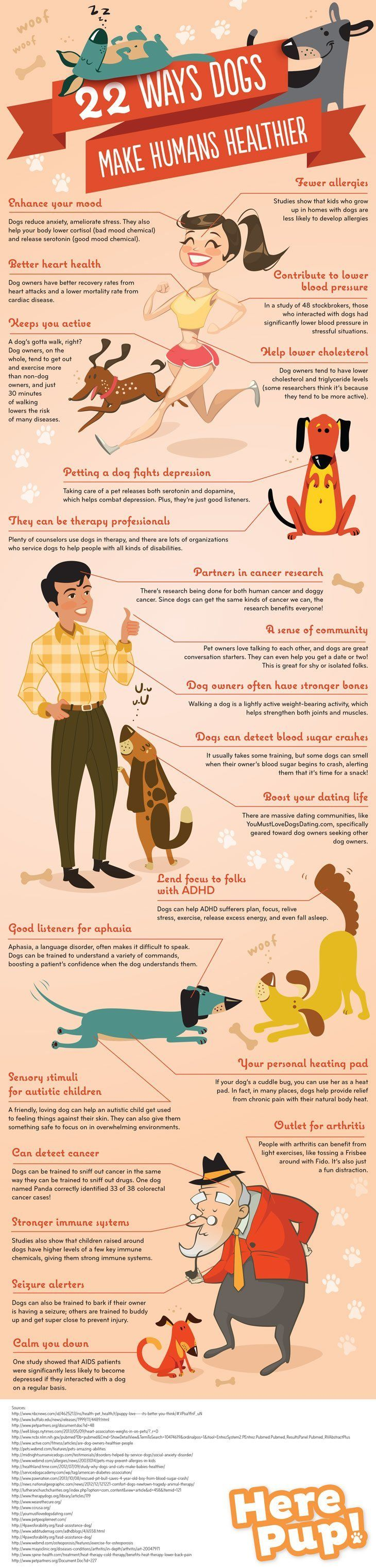 The Many Reasons Why Dogs May Make Us Healthier – Owning a dog or for that matter any pet may help us be happier and healthy individuals.
