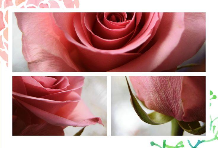 Love is the flower you've got to let grow. - John Lennon