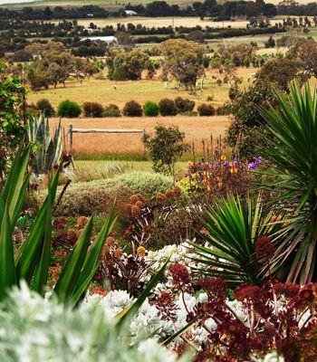 Boat's End water-wise garden. South Australia. Spiky Furcraea, silver-leafed succulents and black Aeonium thrive here. Photo: Brigid Arnott. Australian House & Garden