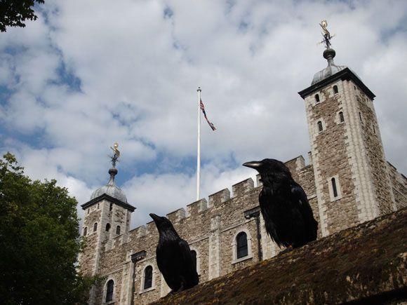 La curiosa historia de los cuervos de la famosa Torre de Londres...