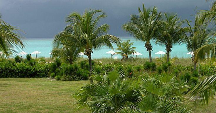 ¿Cuál es el peor momento para viajar a las Bahamas?. Las Bahamas son un lugar tan hermoso, cálido y sin preocupaciones que es difícil creer que hay momentos en que no sea ideal realizar un viaje a este destino. Pero mucha lluvia, amenazas de huracanes y grandes multitudes de turistas pueden hacer que algunos momentos del año no sean tan atractivos como otros para unas vacaciones en las Bahamas.