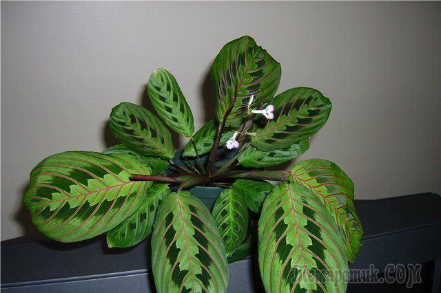 Растения с удивительными способностями