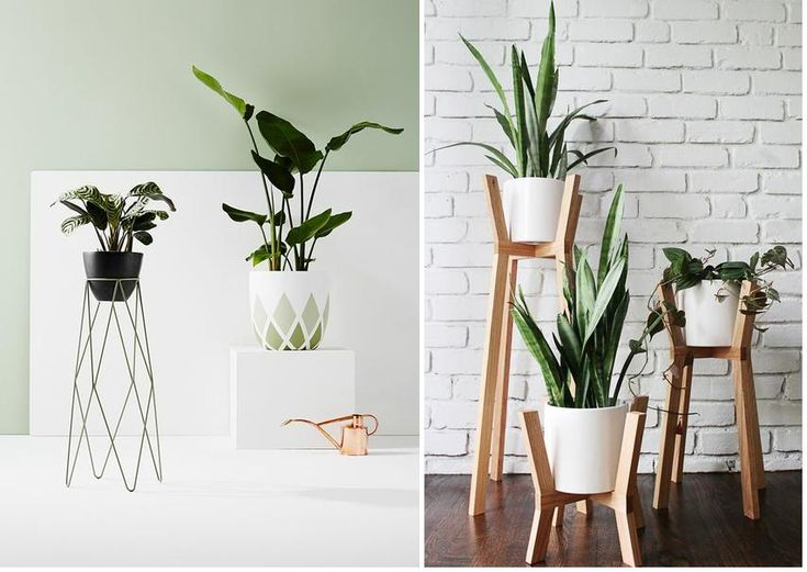 62 best images about jardiner a on pinterest planters - Planta de jade cuidados ...