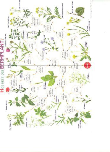 Bermplanten