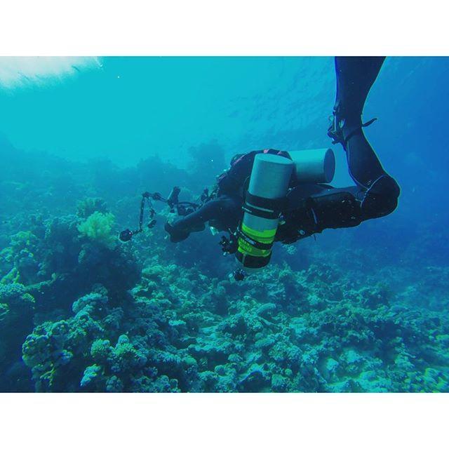 【mahi_guide】さんのInstagramをピンしています。 《#sharmelsheikh #Gopro  #diving #snorkeling #scubadiving #海 #夏 #シャルムエルシェイク #エジプト #travel #vacation #sea #Egypt #ゴープロ #カメラ #撮影 #ビーチ #ダイビング #シュノーケリング #スキューバダイビング #スキューバ #海外 #旅行 #旅 #camera #photography #beautifuldestinations #写真好きな人と繋がりたい #写真部 #beach》