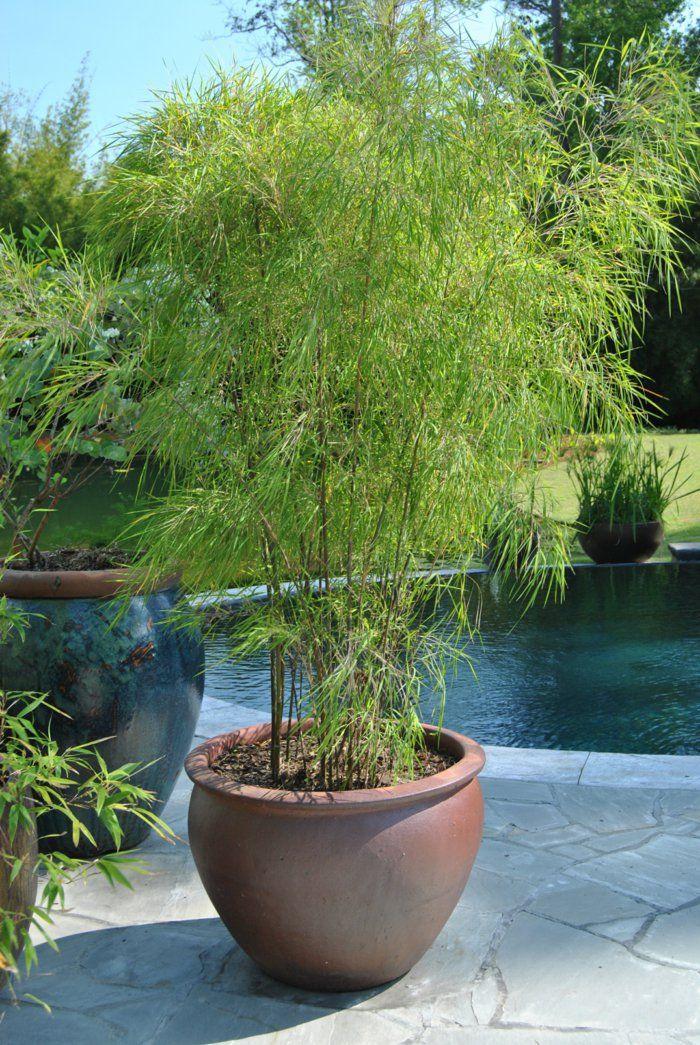 die besten 25+ winterharte kübelpflanzen als sichtschutz ideen auf ... - Bambus Kubel Sichtschutz Terrasse