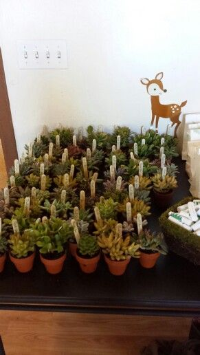 succulents as thank you gifts  woodland themed baby shower