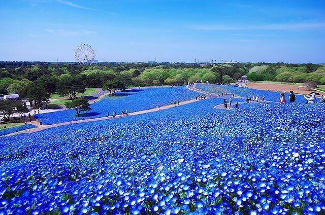Hitashi Seaside Park – Japan | 1,000,000 Places