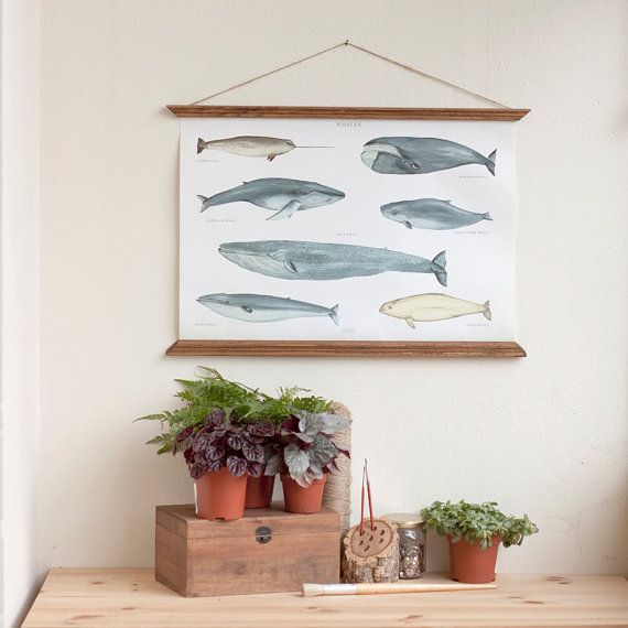 NEW ! A2 Whales Canvas poster  - vintage illustration educational wall chart illustration WAPA2001 on Etsy, $82.76