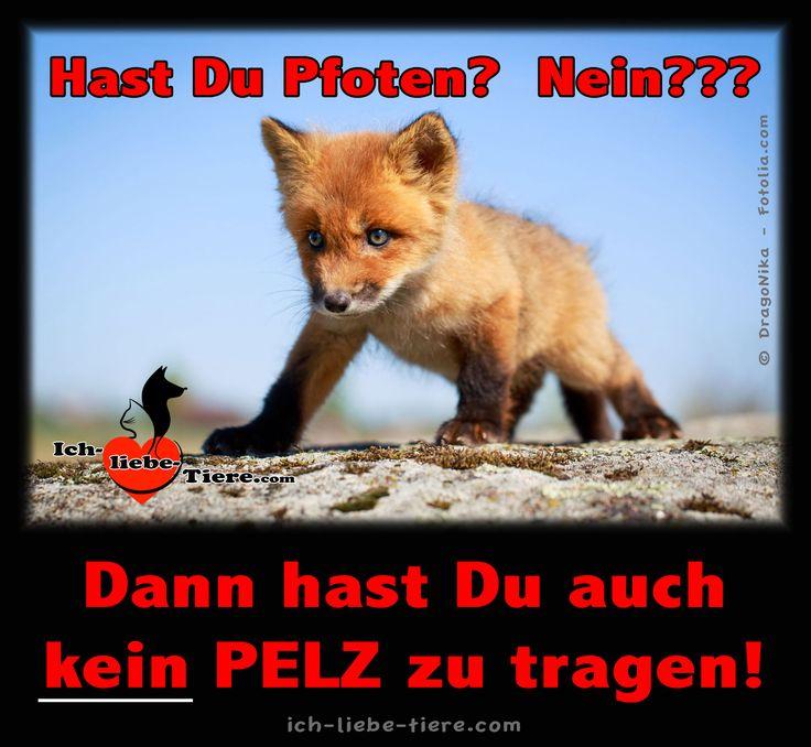 NEIN zu PELZ! >> http://www.ich-liebe-tiere.com/ <<                                                                                                                                                      Mehr