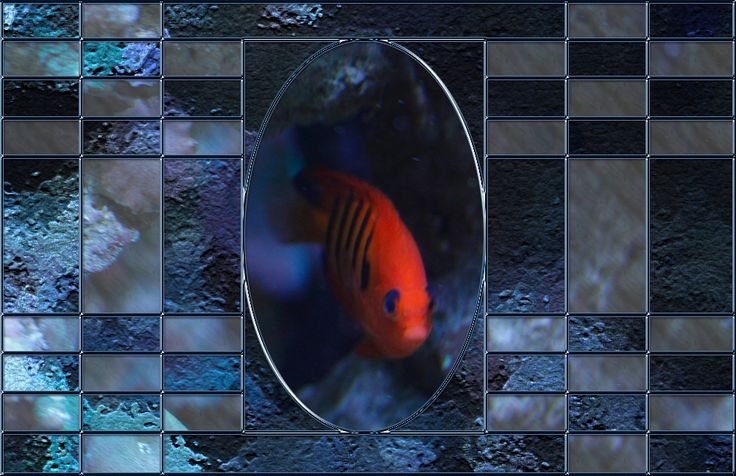 Lesson 12 Fish Frame
