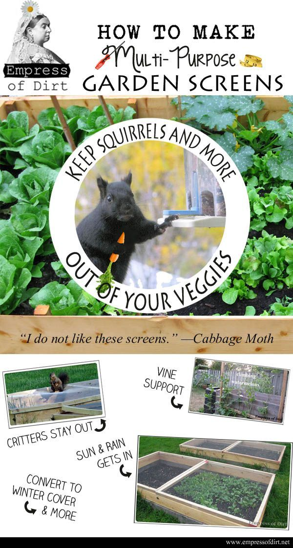 17 best ideas about garden screening on pinterest bamboo - How to keep squirrels away from garden ...
